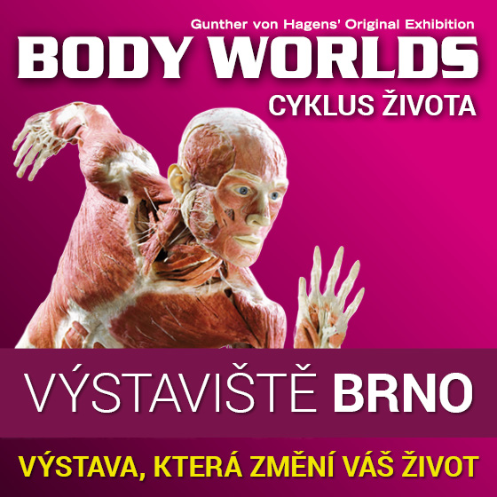 Body Worlds<br>Gunther von Hagens' Original Exhibition